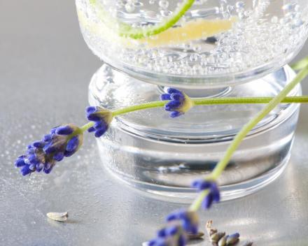 ADURO Lavendel